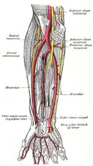Anatomia cotului