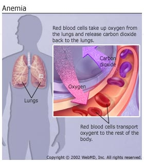 Anemiile hemolitice autoimune: hemoliza, haptoglobina