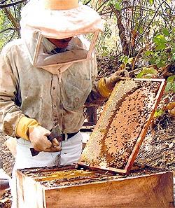 imagine cu apicultura