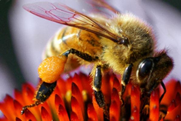 Aspecte clinice la tratamentul prin apiterapie cu miere