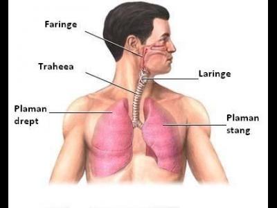 Bronsiolitele acute