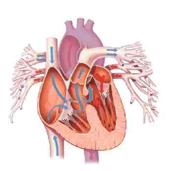 imagine cu cardiopatii
