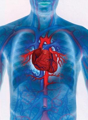 Boli ale aparatului cardiovascular tratament cu produse apicole