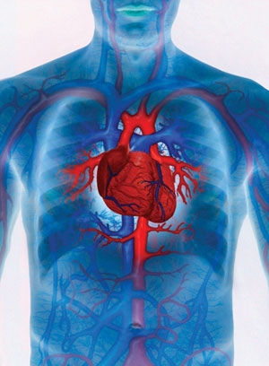 imagini cardiovascular