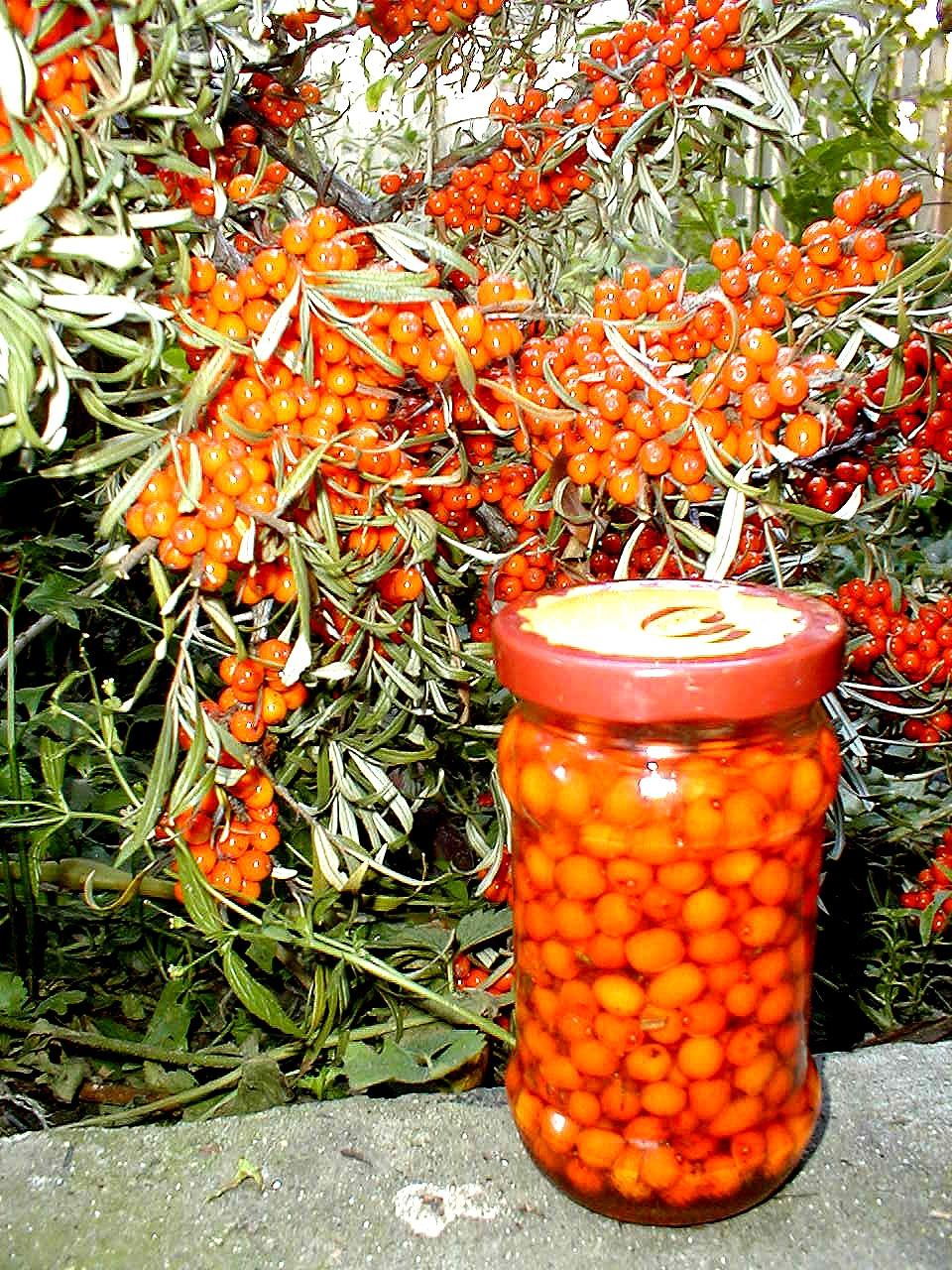 Catina - unde gasim catina, cum preparam fructele de catina?