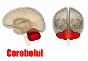 imagine cu cerebelul