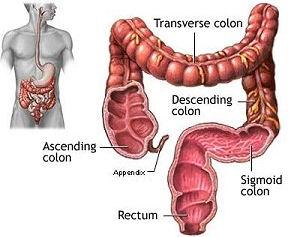imagini colon