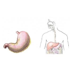 Enteritele si enterocolitele acute - tratamentul