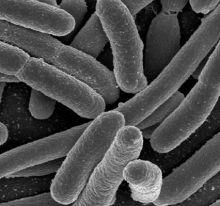 Si microbii sunt prezenti in apa..