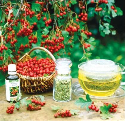 lista plante medicinale interzise