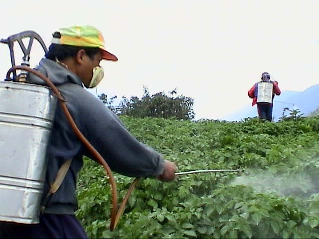imagini pesticidele