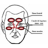 Sinusurile paranazale