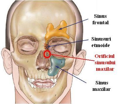 images sinusurile