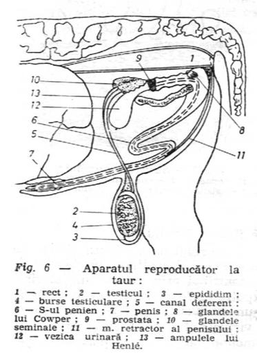 poza despre testicul