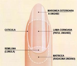 poza despre unghiile